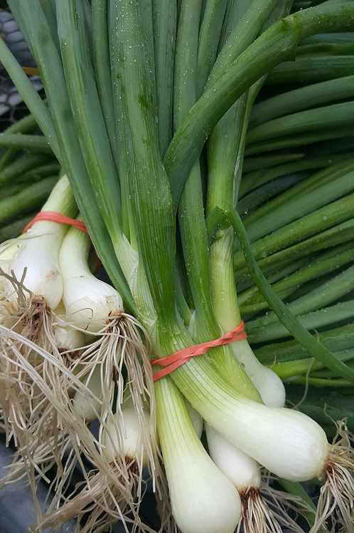 Green Onions by the Bunch