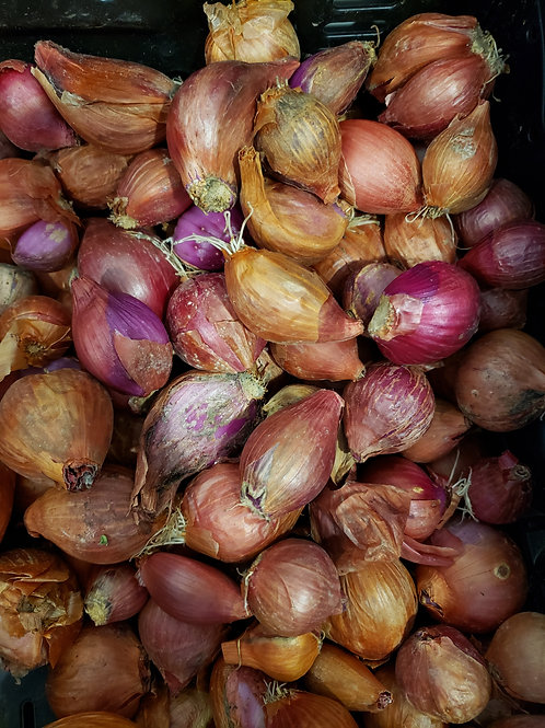 Shallots by the Pound