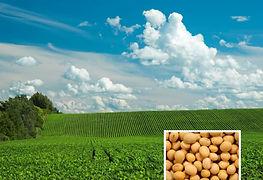 Soy Field w Soybean Inset.jpg