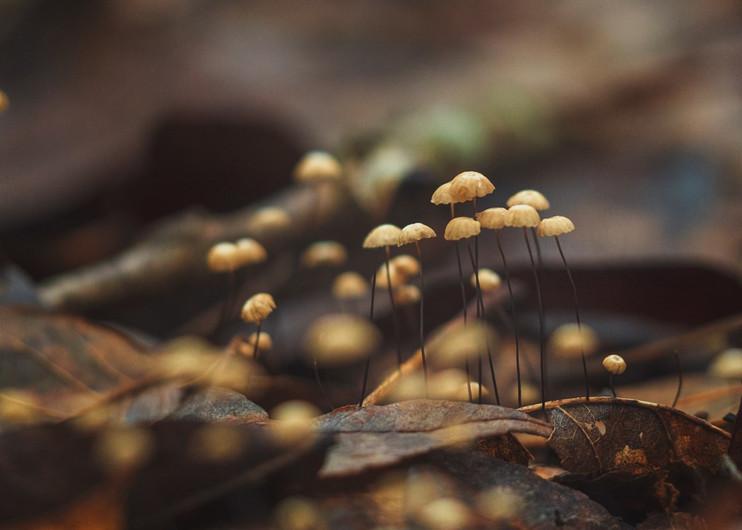 Tiny Mushrooms.jpeg