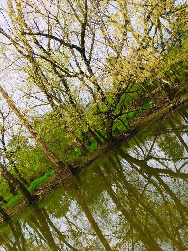 Y9 Murfreesboro, Stones River by Ada Pip