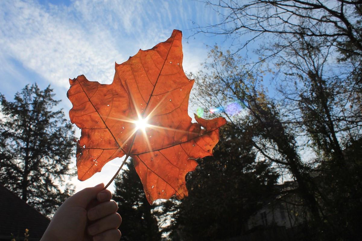 Y5 Flora - Sunlight Through a Leaf by An