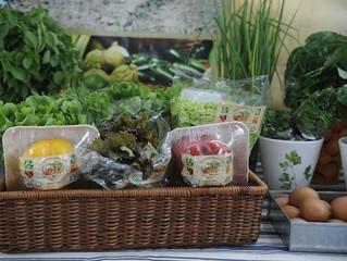 Certificação de produtos orgânicos no Brasil é bem avaliada