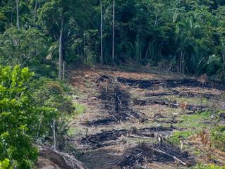 Em meio a ataques, grupo usa ciência para contrapor visão socioambiental do governo