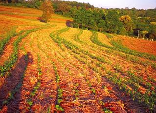 Sistemas agroecológicos produzem mais até durante a seca