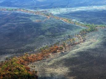 Julgamento do Código Florestal no STF: os riscos para o Cerrado e o abastecimento de água