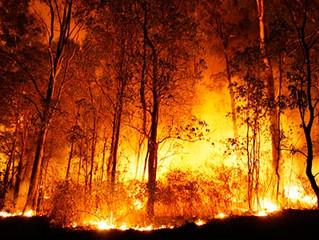 Incêndios na Floresta Amazônica levam a redução de 94% das espécies de árvores. Entrevista especial