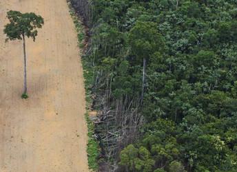 Novo Código Florestal contribuiu para aumento no desmatamento