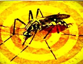 Surto de Febre Amarela está diretamente ligado à perda de biodiversidade. Entrevista especial com Ma