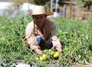 Agroecologia vê com preocupação mais um pacote do governo para o agronegócio