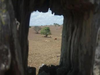 Alertas de seca disparam no Brasil e crescem 409% em treze anos