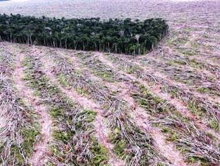 Aumento do desmatamento na Amazônia é gravíssimo e precisa ser contido