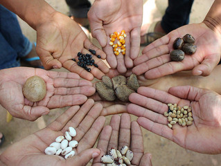 Projeto de lei quer proibir agricultores de produzir, distribuir e armazenar sementes