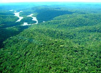As florestas (de novo) na mira dos senhores senadores