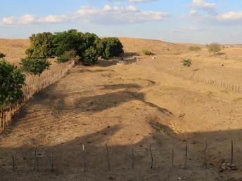 Seca extrema desafia sobrevivência no semiárido do Nordeste