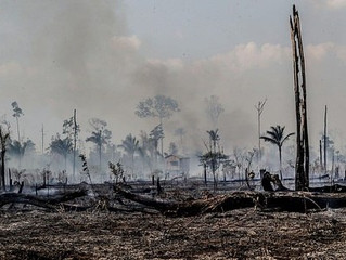 """Como """"efeito Bolsonaro"""" coloca Amazônia em risco"""