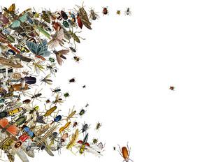 O apocalipse dos insetos