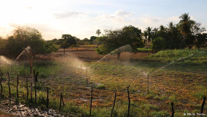 Em meio à seca, Bolsa Família garante a sobrevivência de muitos no Ceará