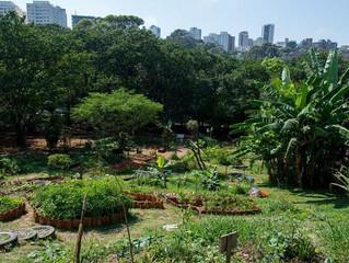 Hortas urbanas produzem 20% dos alimentos consumidos no mundo