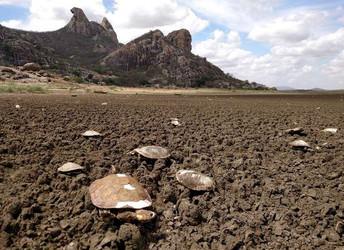 Como açude mais antigo do Brasil virou 'cemitério de cágados'