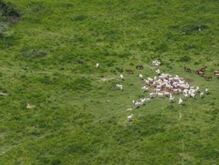 JBS compra gado de áreas desmatadas ilegalmente e leva multa de R$24 milhões