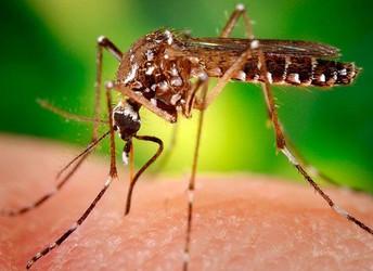 Custo socioeconômico do zika deve chegar a até US$18 bi na América Latina e no Caribe