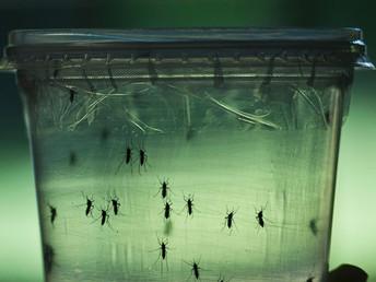 Vírus zika passou de emergência a desafio de longo prazo à saúde pública