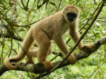 Espécie de primata contribui para a conservação de água potável