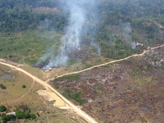 PGR pede inconstitucionalidade de lei que favorece grilagem e desmatamento na Amazônia