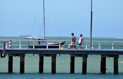 Dog on the Jetty