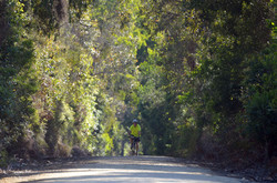 Lone Rider, Dryings Rd