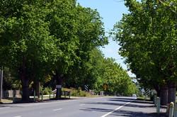 Avenue of Honour, Welshpool