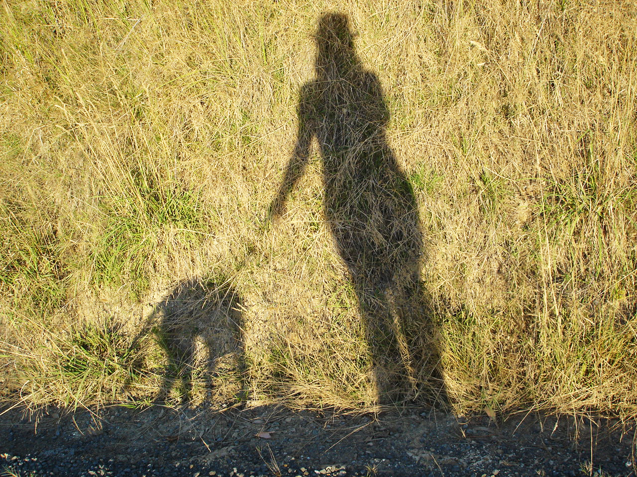 Leongatha, dog walker