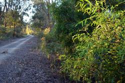 Trail-View-SCtoM3-Panax-Elderberry_lo