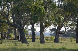 Landscape at Toora