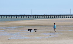 Walking the dogs, Port Welshpool