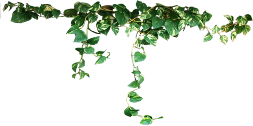 ivy-transparent-aesthetic-leaves.png