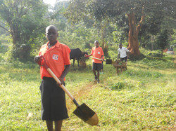 Collecting cow manure