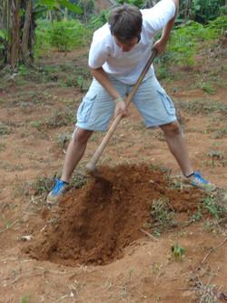 Planting orange trees
