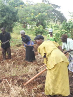 Clearing land for vegetable garden