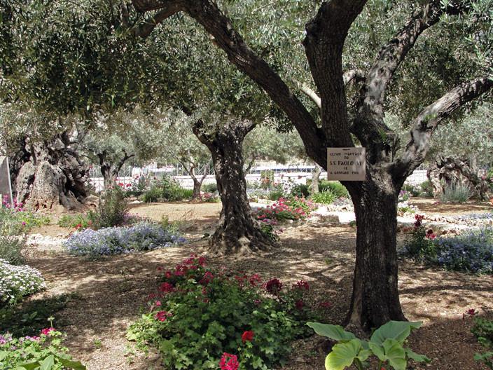 Jardim das Oliveiras da Igreja da Agonia