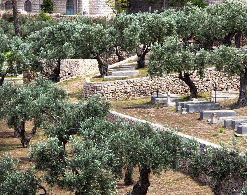 Kieron, túmulos cristãos e oliveiras