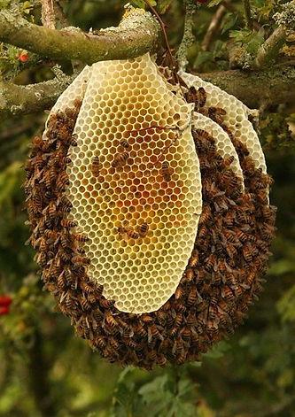 beehive.jpg