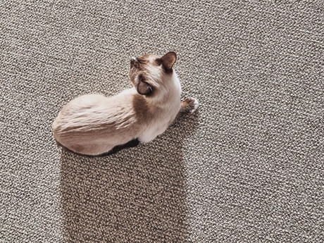 purrfection_zz097_00558_willow_cat.jpeg
