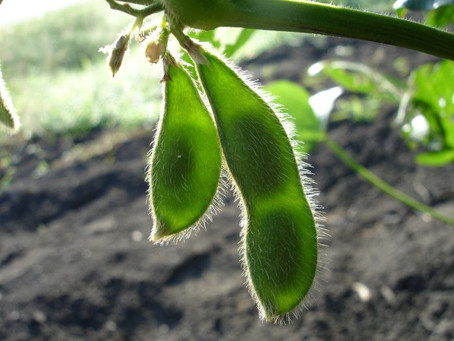 Ohio Soybean Council Aides Development of Soy-Based Products