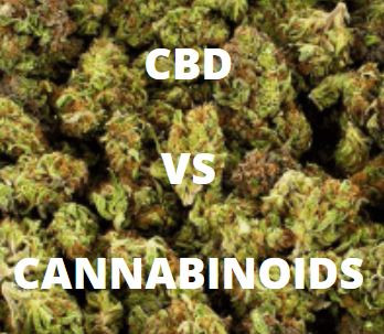 What is the difference between CBD and Cannabinoids?