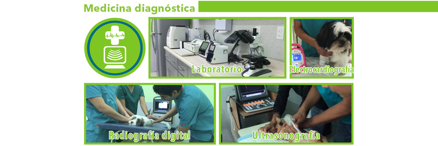 Medicina Diagnostica.jpg