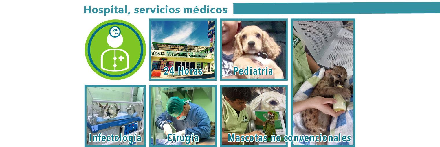 Hospital, Servicios especiales.jpg