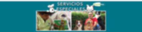 Encabezado de servicios especiales.jpg