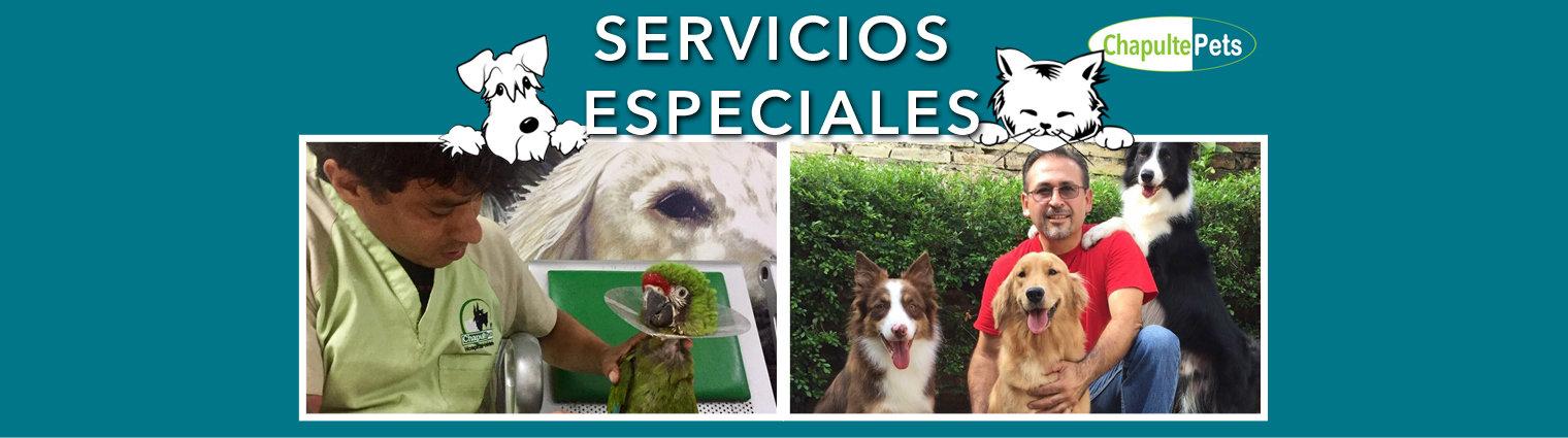 Encabezado Servicios especiales.jpg